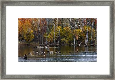 Annual Meet And Greet At The Pond Framed Print