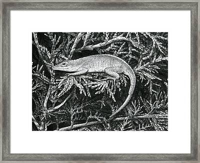 Anole Loafer Framed Print