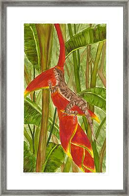 Anolis Humilis Framed Print by Cindy Hitchcock