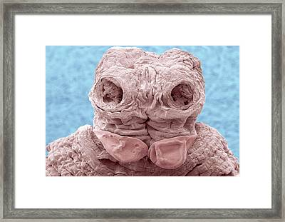 Anoplocephala Tapeworm Framed Print by Thierry Berrod, Mona Lisa Production