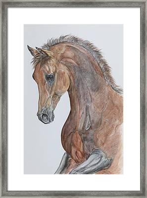 Another  Arabian Horse Framed Print by Janina  Suuronen