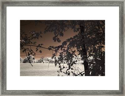 Another Blasted Tree Framed Print