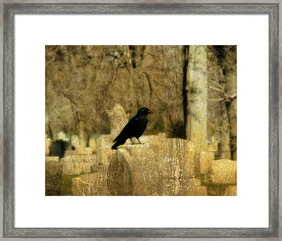 Another Day For Crow In The Graveyard Framed Print