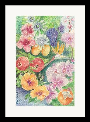 Passionfruit Drawings Framed Prints