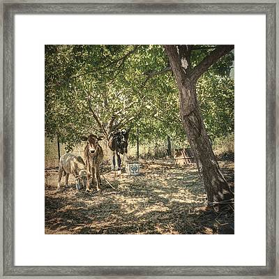 Another Day Framed Print by Taylan Apukovska