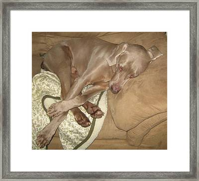 Another Dog Day Framed Print