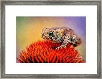 Another Fine Mess Framed Print by Lois Bryan