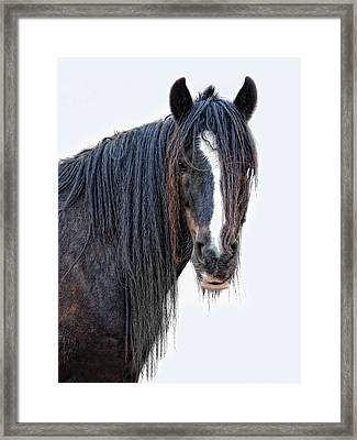Another Horse With No Name Framed Print