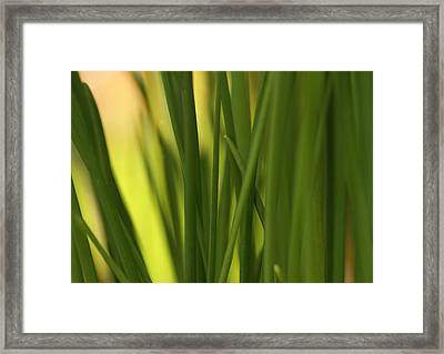 Sunbathing Chives Framed Print by Connie Handscomb