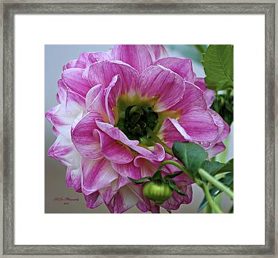 Another Point Of View Framed Print by Jeanette C Landstrom