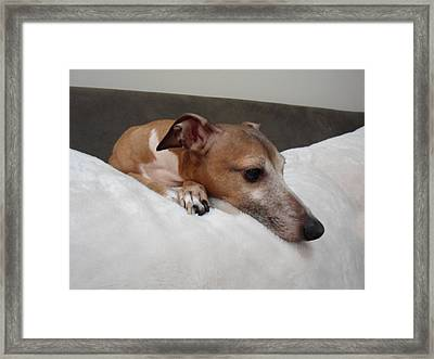 Another Relaxing Day - Italian Greyhound  Framed Print by Santos Arellano
