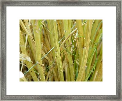 Another Simple Thing Framed Print
