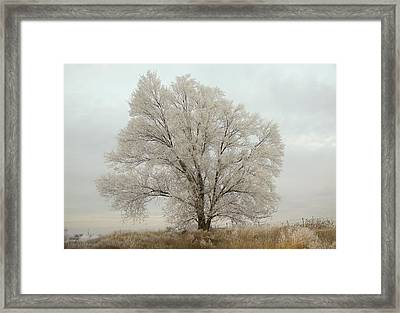 Another Tree Framed Print by Gloria Pasko