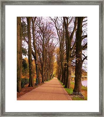 Another View Of The Avenue Of Limes Framed Print