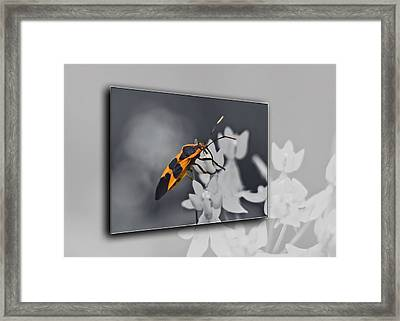 Another World Framed Print by Carolyn Marshall