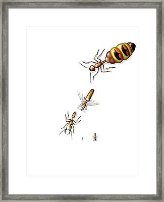 Ant Castes Framed Print by Claus Lunau