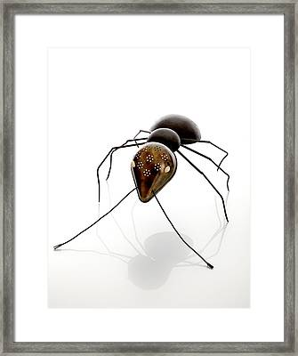 Ant Framed Print by Lawrie Simonson