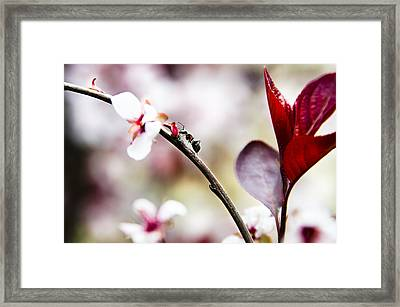 Ant On A Plant1 Framed Print by Josh Clifford