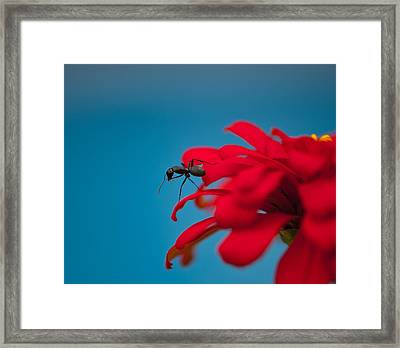 Ant On Flower Framed Print