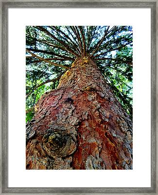 Ant View Framed Print by Mary Beth Landis