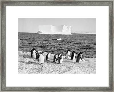 Antarctic Penguins And Iceberg Framed Print