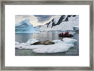 Antarctic Serenity... Framed Print