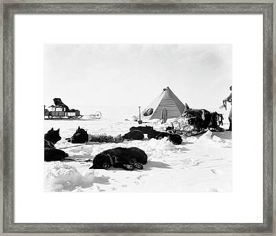 Antarctic Sled Dogs Framed Print by Scott Polar Research Institute