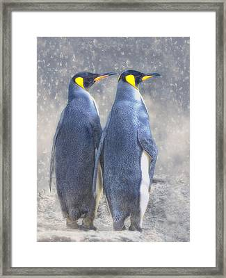 Antarctic To The Right? Framed Print