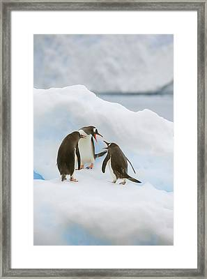 Antarctica, Neko Harbor Framed Print by Jaynes Gallery