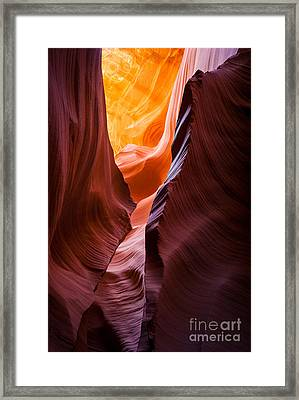 Antelope Duality Framed Print by Inge Johnsson