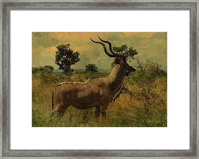 Antelope Framed Print by EricaMaxine  Price
