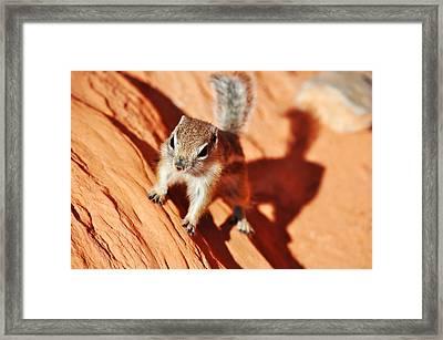 Antelope Ground Squirrel Framed Print