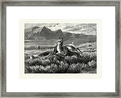 Antelope-hunting On The Plains. W.m Framed Print by English School