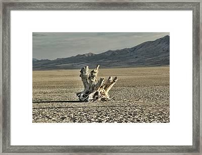 Antelope Island Stump Framed Print by Ely Arsha