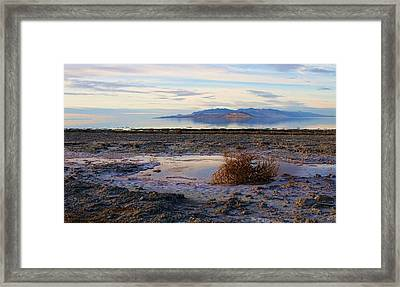 Framed Print featuring the photograph Antelope Island - Tumble Weed by Ely Arsha