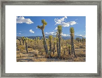 Antelope Valley Joshua Trees 1 Framed Print