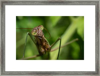 Antenna Lickin' Good Framed Print by Dazz Lee Photography