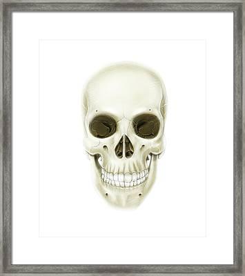 Anterior View Of Human Skull Framed Print