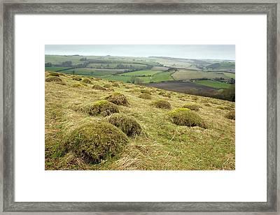 Anthills Framed Print
