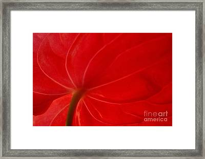 Framed Print featuring the photograph Anthurium 2 by Ranjini Kandasamy
