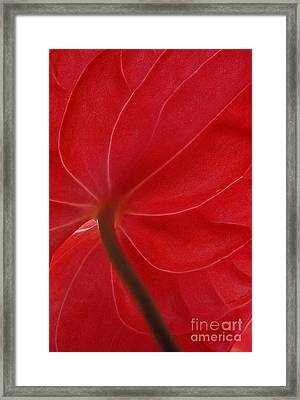 Framed Print featuring the photograph Anthurium by Ranjini Kandasamy