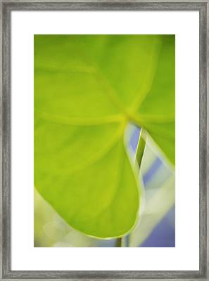 Anthurium Framed Print by Silke Magino