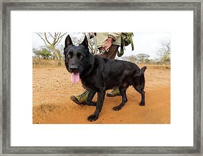 Anti-poaching Dog Patrol Framed Print by Peter Chadwick