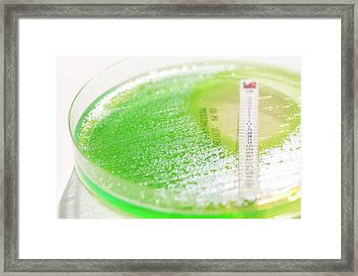 Antibiotic Sensitivity Testing Framed Print