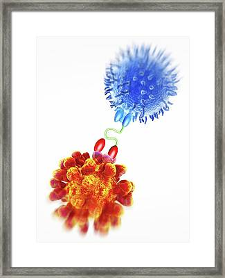 Antibody Acting Against Tumuor Cell Framed Print