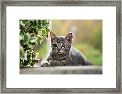 Anticipation  Framed Print by Dennis Baswell