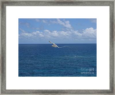 Framed Print featuring the photograph Antigua - In Flight by HEVi FineArt