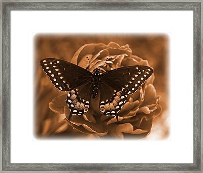 Antique Butterfly Framed Print by Diane Reed