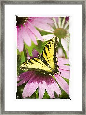 Antique Butterfly Postcard No. 3022 Framed Print