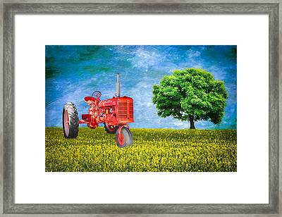 Antique Farmall Tractor Framed Print by Fred Larson